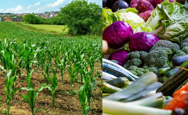 Agricultural Production and Business Skills