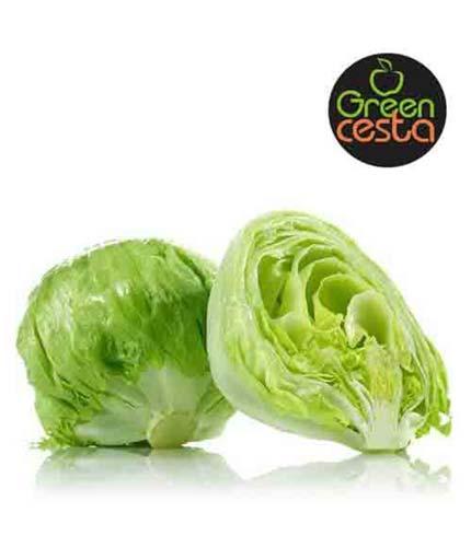 Green Cesta Cabbage