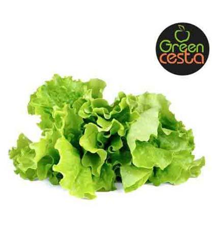 Green Cesta Lettuce