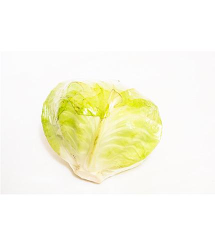 Fresh Organic Cabbage